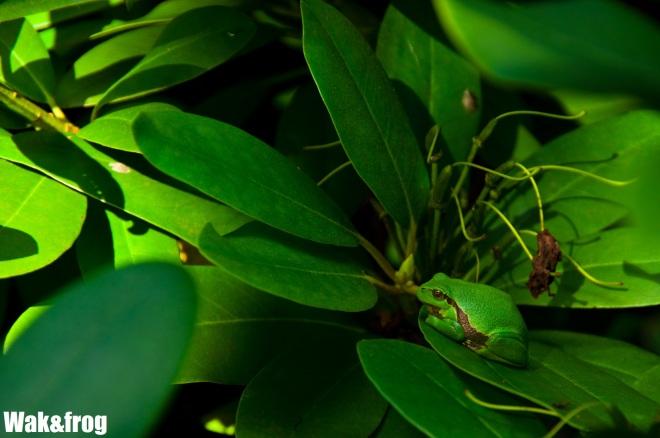 wak&frog_wordpress