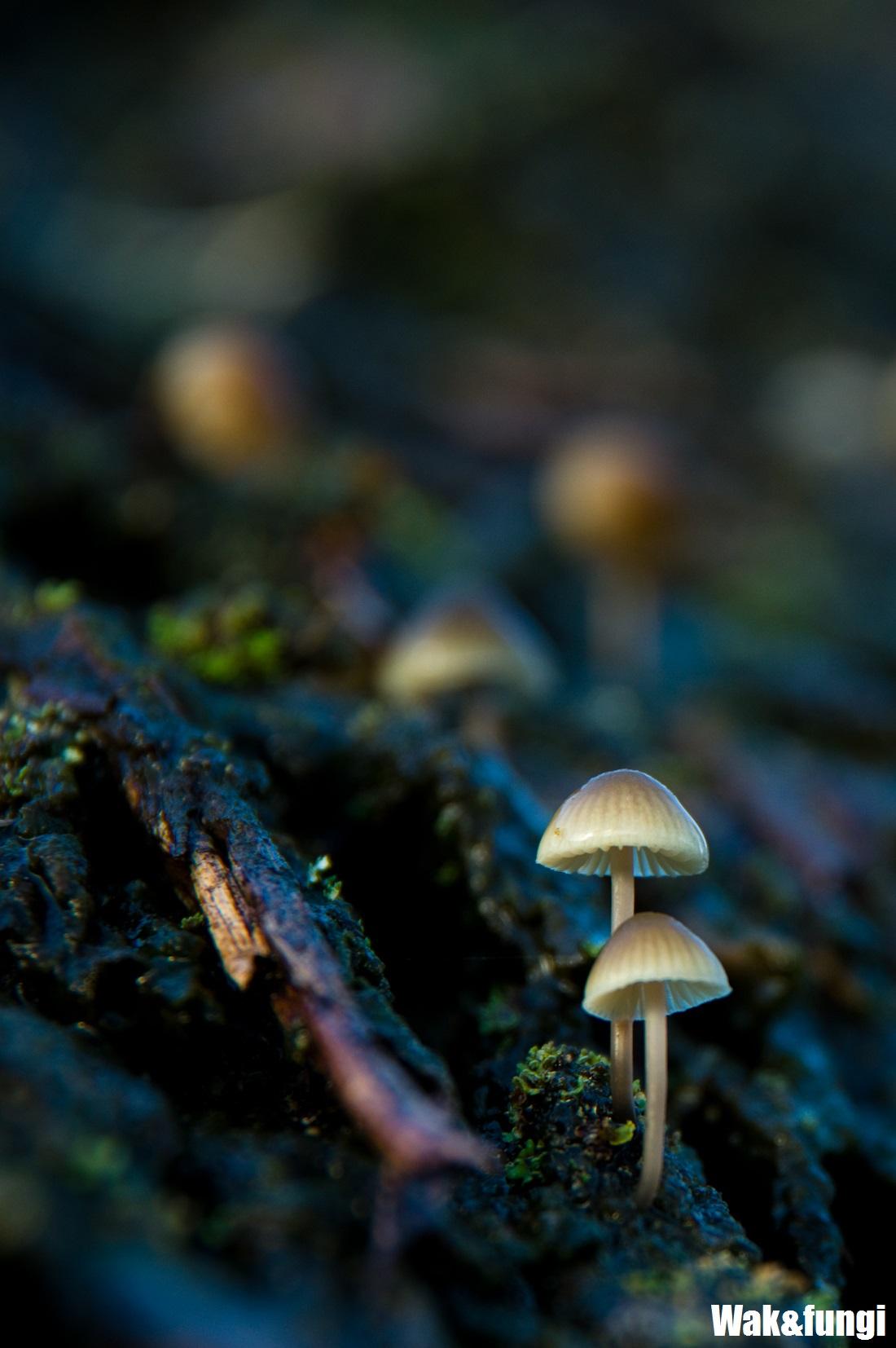 wak&fungi_portrait_wordpress_marked