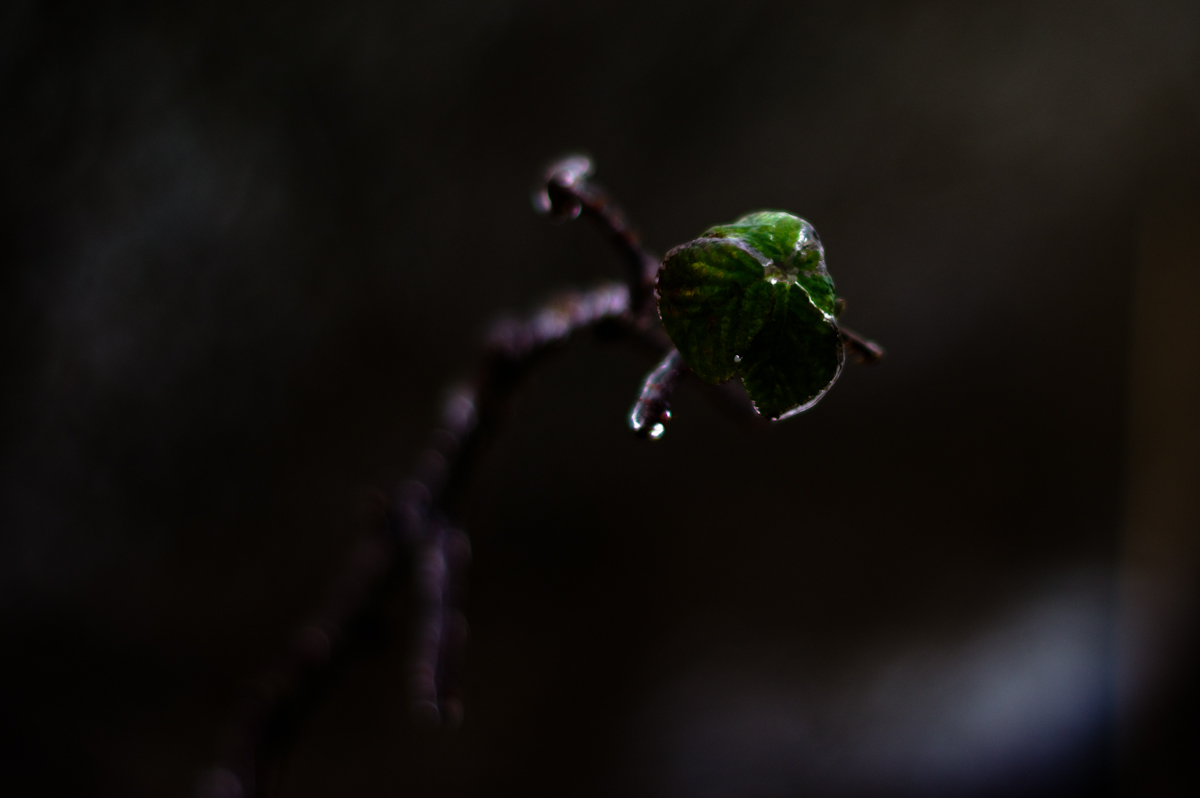 frozen leaves in the winter still green and alive yet frozen in time forever by jeffrey wakanno