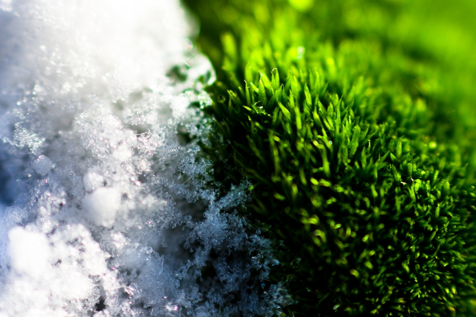 wakanno white and green macro of snow and grass shining beauty of nature and pure contrast