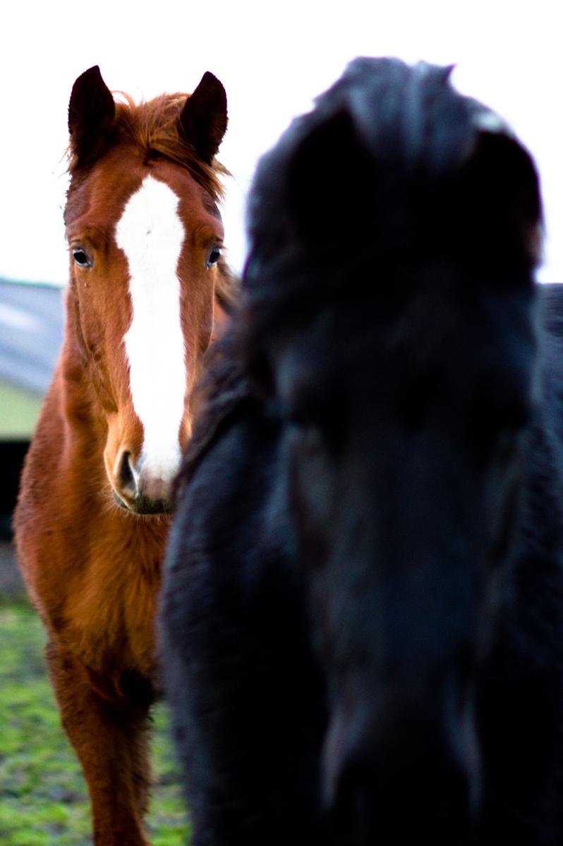 twee frieze paarden door jeffrey wakanno portrait wakenco fotografie