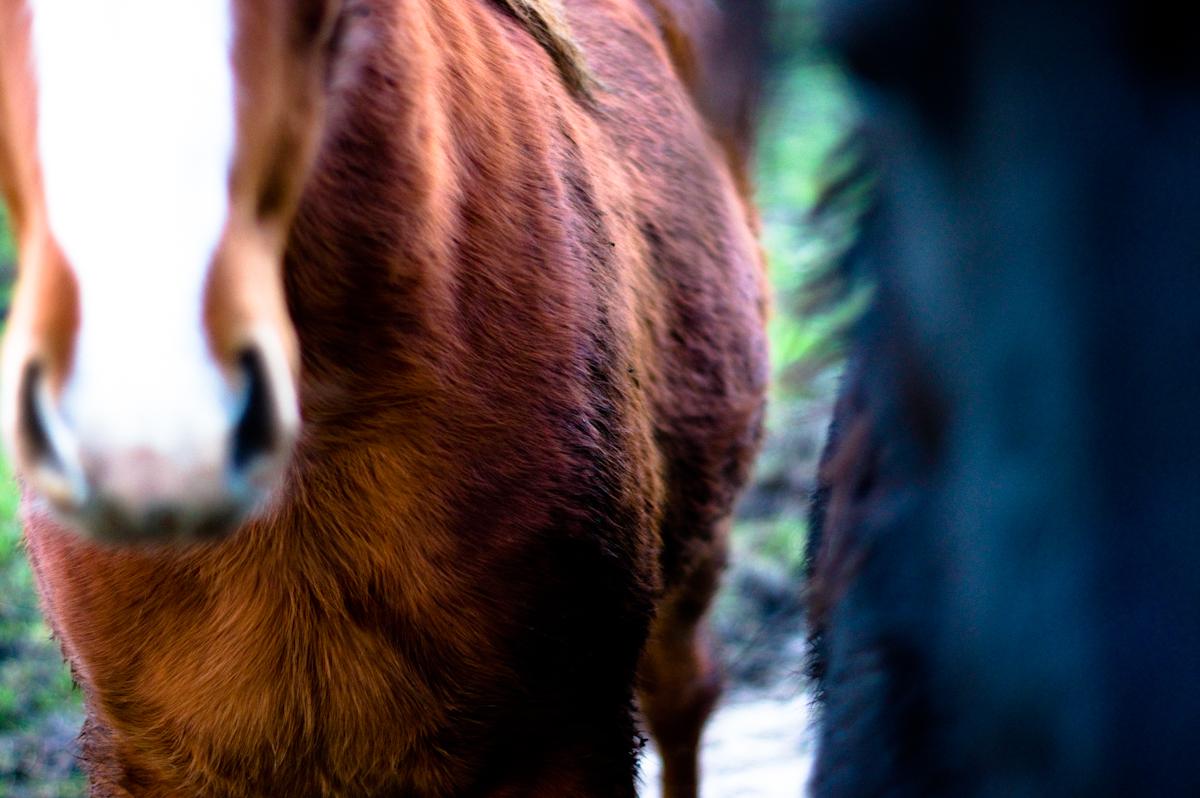 frieze paarden door Jeffrey Wakanno close up and biting my jacket darn get away!
