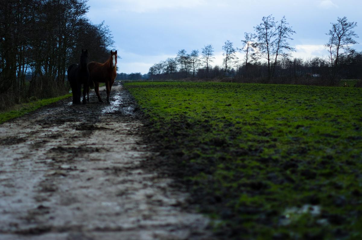 twee paarden op een weggetje in friesland door jeffrey wakanno wakenco fotografie