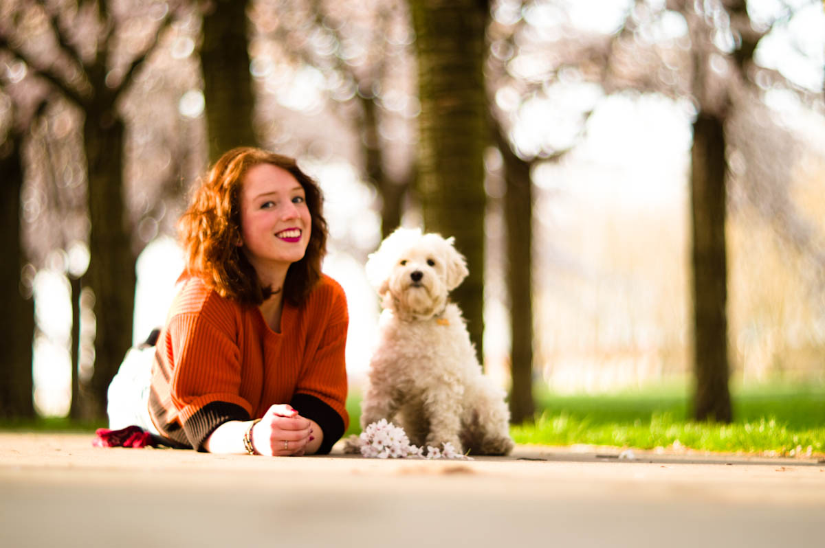 beautiful brunette girl with her dog under the cherry blossoms by jeffrey wakanno