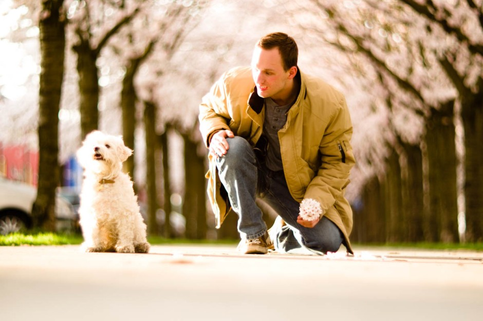young man with white dog under cherry blossom